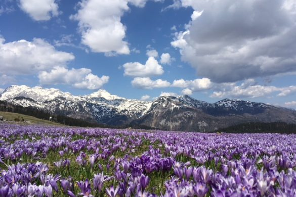 Mountains are calling – Velika Planina, Slovenia